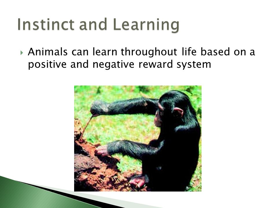 Animals can learn throughout life based on a positive and negative reward system