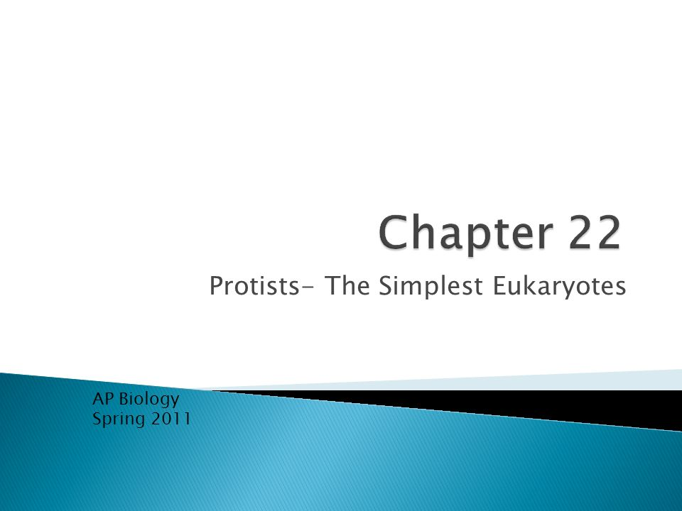 Protists- The Simplest Eukaryotes AP Biology Spring 2011