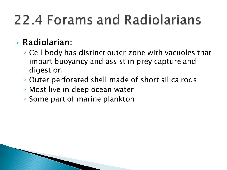 Radiolarian: Cell body has distinct outer zone with vacuoles that impart buoyancy and assist in prey capture and digestion Outer perforated shell made