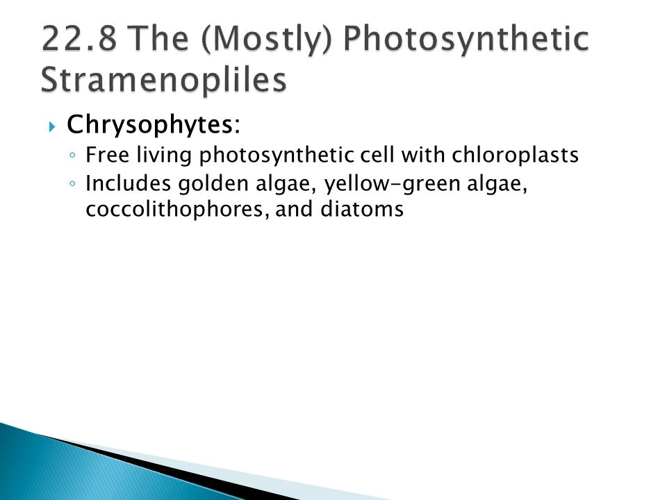 Chrysophytes: Free living photosynthetic cell with chloroplasts Includes golden algae, yellow-green algae, coccolithophores, and diatoms