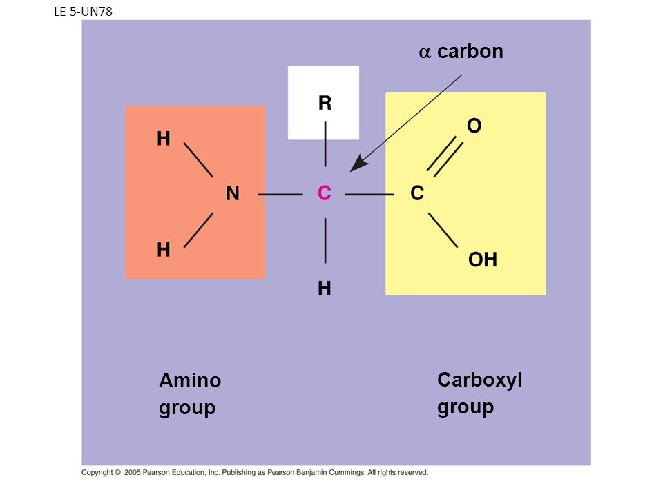 LE 5-UN78 Amino group Carboxyl group carbon