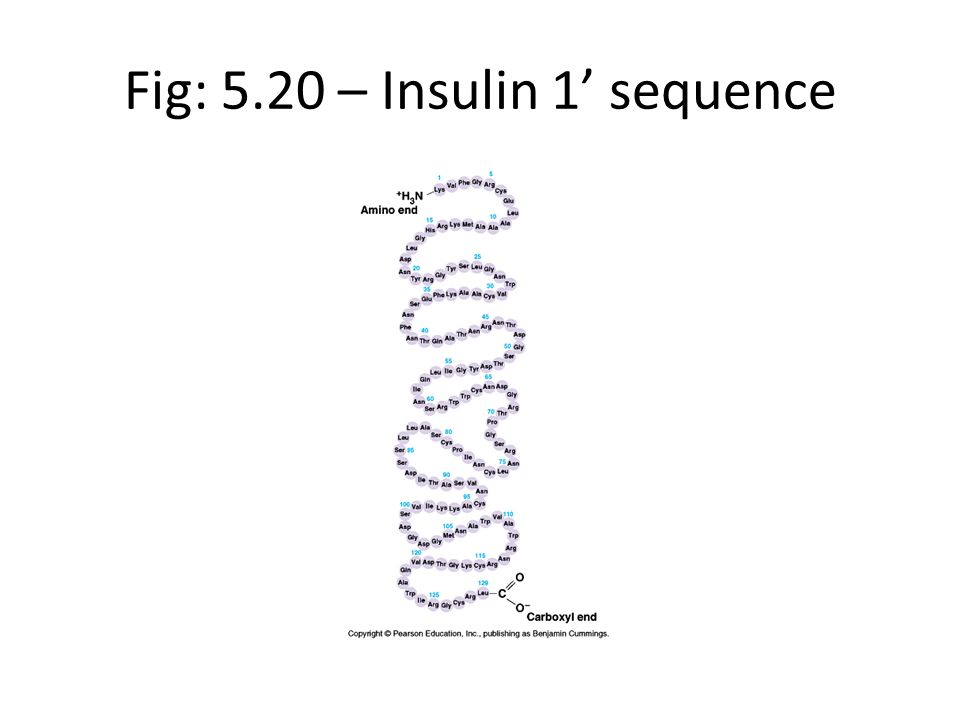 Fig: 5.20 – Insulin 1 sequence