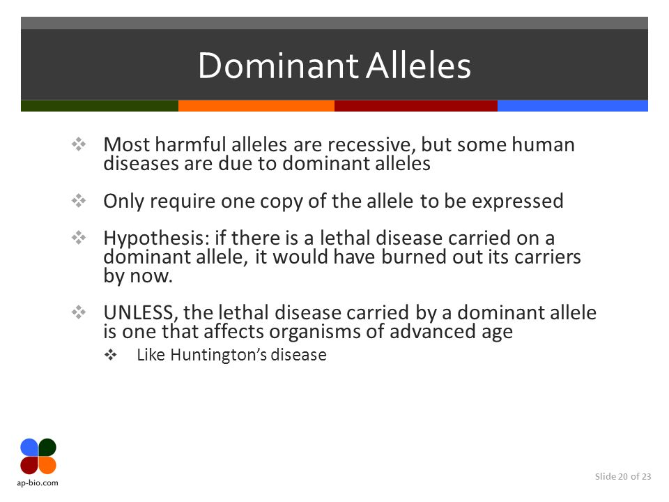 Slide 20 of 23 Dominant Alleles Most harmful alleles are recessive, but some human diseases are due to dominant alleles Only require one copy of the a