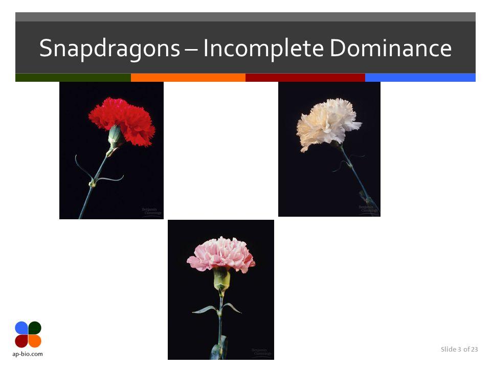 Slide 3 of 23 Snapdragons – Incomplete Dominance