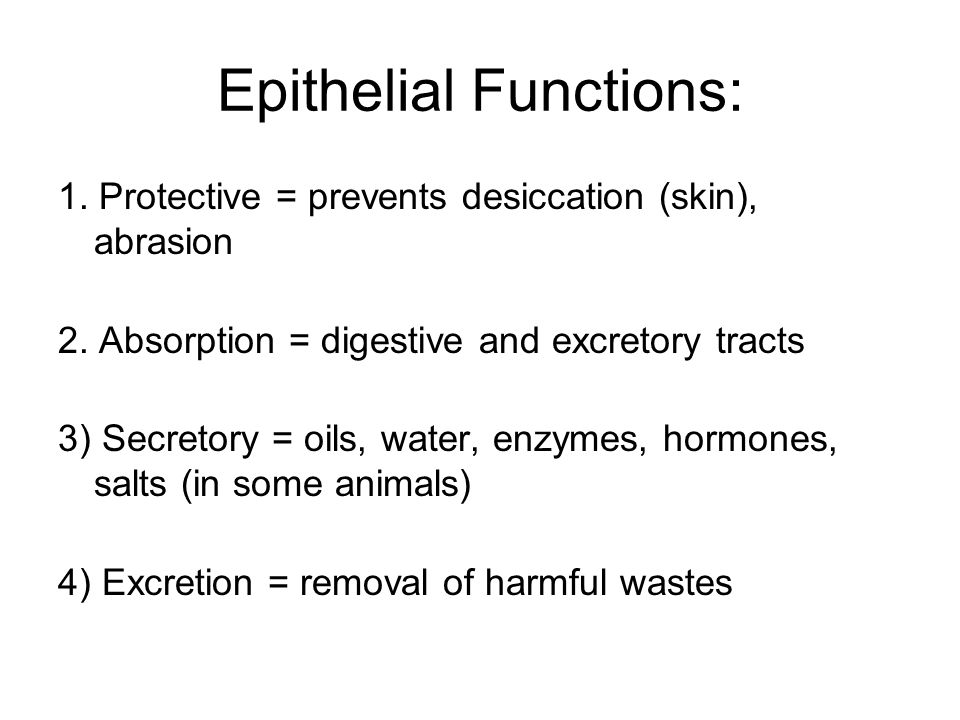 Epithelial Functions: 1. Protective = prevents desiccation (skin), abrasion 2. Absorption = digestive and excretory tracts 3) Secretory = oils, water,
