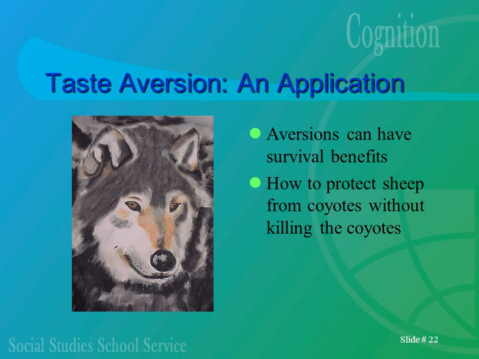 Slide # 22 Taste Aversion: An Application Aversions can have survival benefits How to protect sheep from coyotes without killing the coyotes