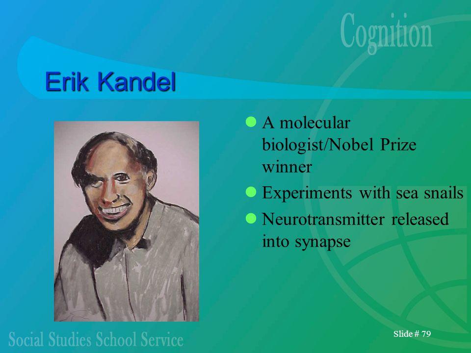 Slide # 79 Erik Kandel A molecular biologist/Nobel Prize winner Experiments with sea snails Neurotransmitter released into synapse