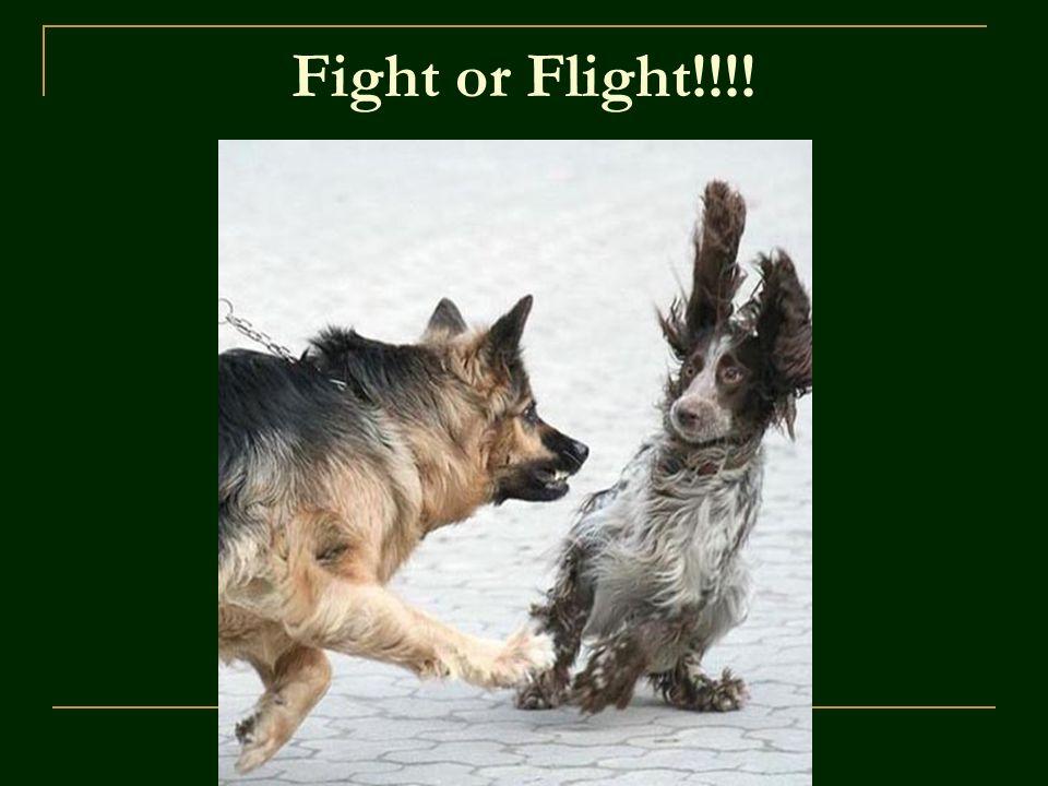 Fight or Flight!!!!
