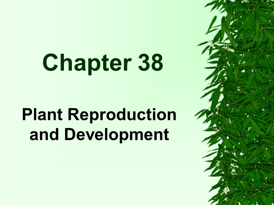 Reproduction and Development Seeds Monocots have a single cotyledon called a scutellum Embryo of a grass seed is enclosed by two sheaths, a coleorhiza, which covers the young root, and a coleoptile, which cover the young shoot