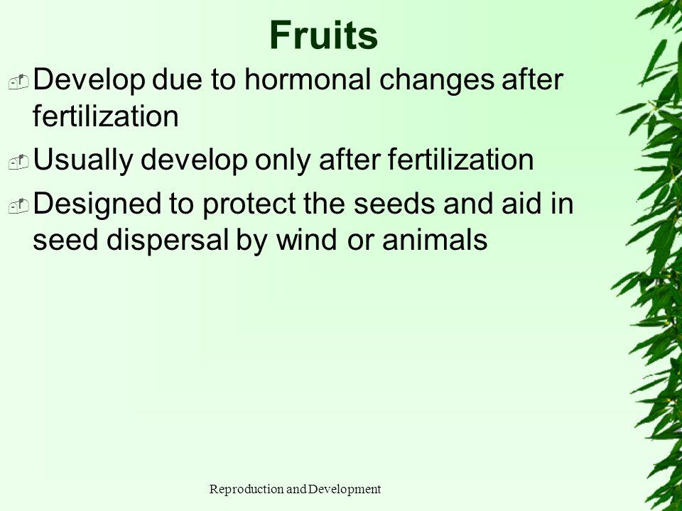 Reproduction and Development Fruits Develop due to hormonal changes after fertilization Usually develop only after fertilization Designed to protect t