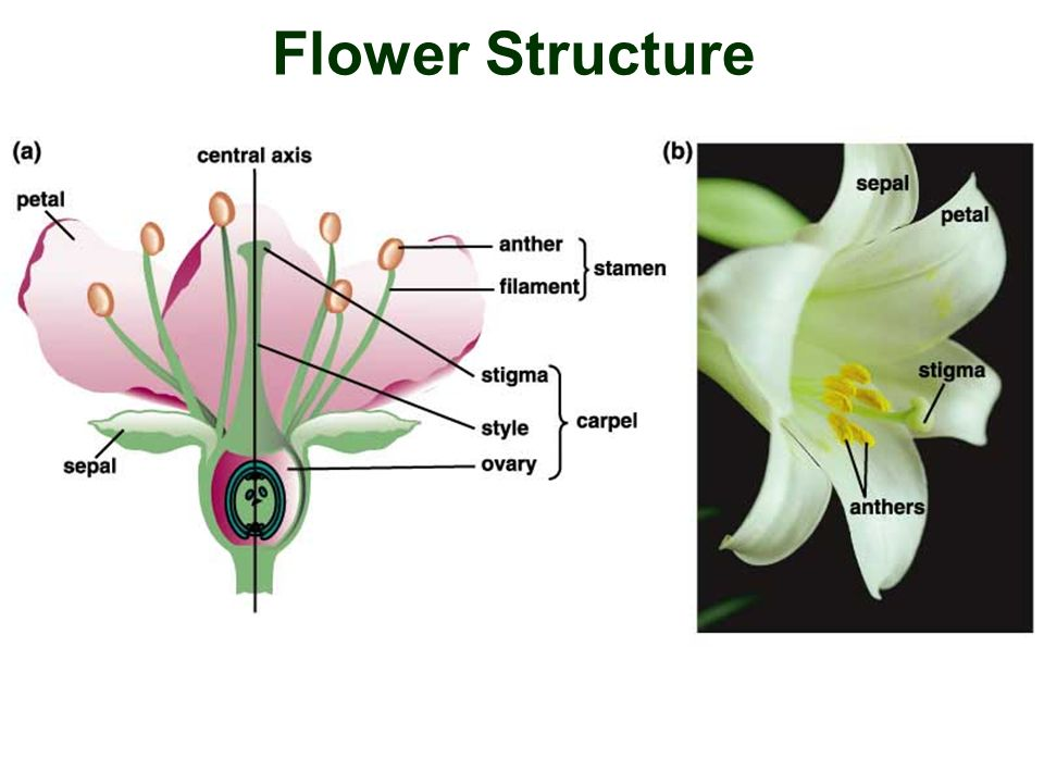 Reproduction and Development Flower Structure