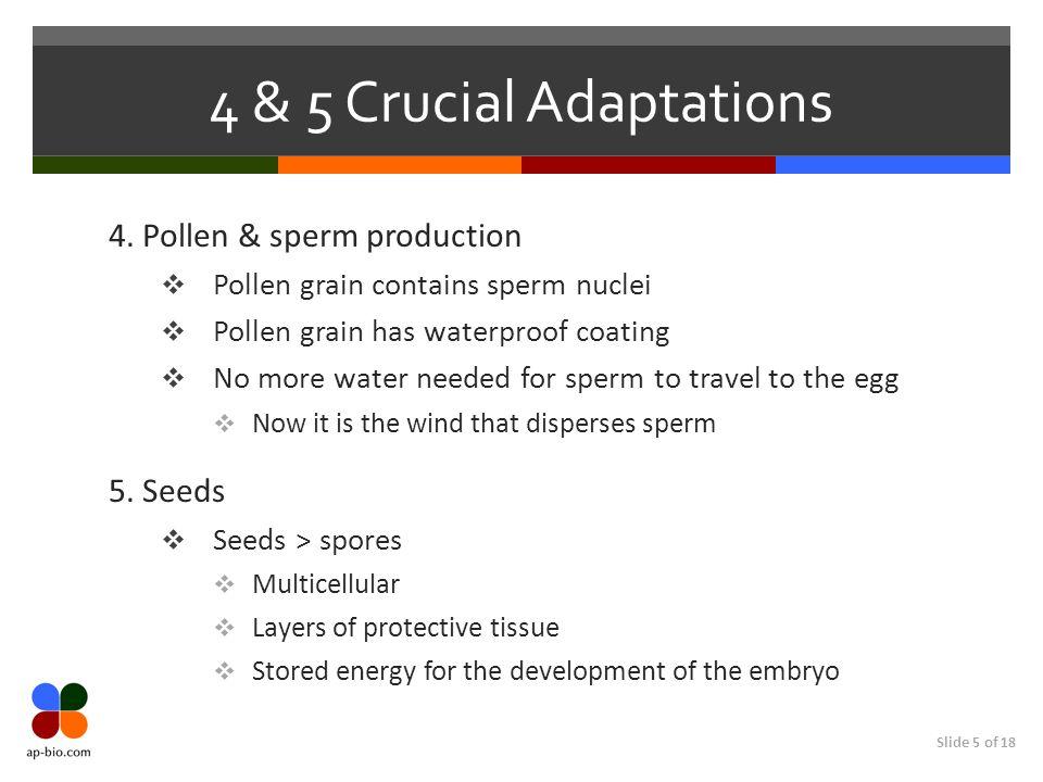 Slide 5 of 18 4 & 5 Crucial Adaptations 4. Pollen & sperm production Pollen grain contains sperm nuclei Pollen grain has waterproof coating No more wa