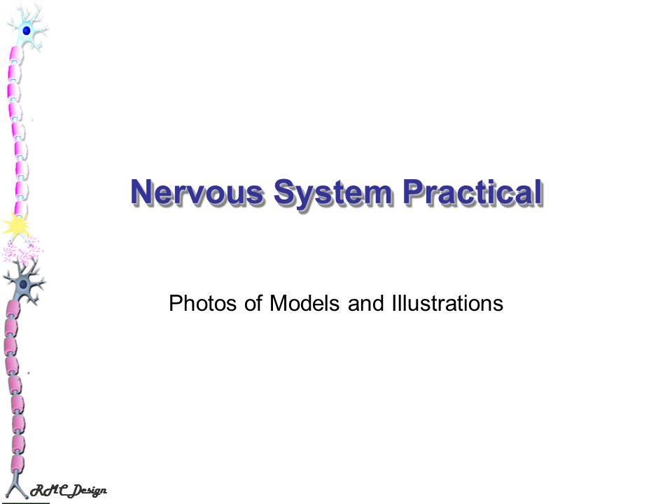 RMC Design Nervous System Practical Photos of Models and Illustrations