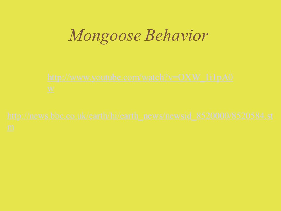 Mongoose Behavior http://news.bbc.co.uk/earth/hi/earth_news/newsid_8520000/8520584.st m http://www.youtube.com/watch?v=OXW_1i1pA0 w