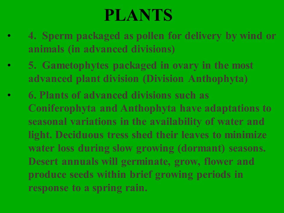 PLANTS 4. Sperm packaged as pollen for delivery by wind or animals (in advanced divisions) 5. Gametophytes packaged in ovary in the most advanced plan