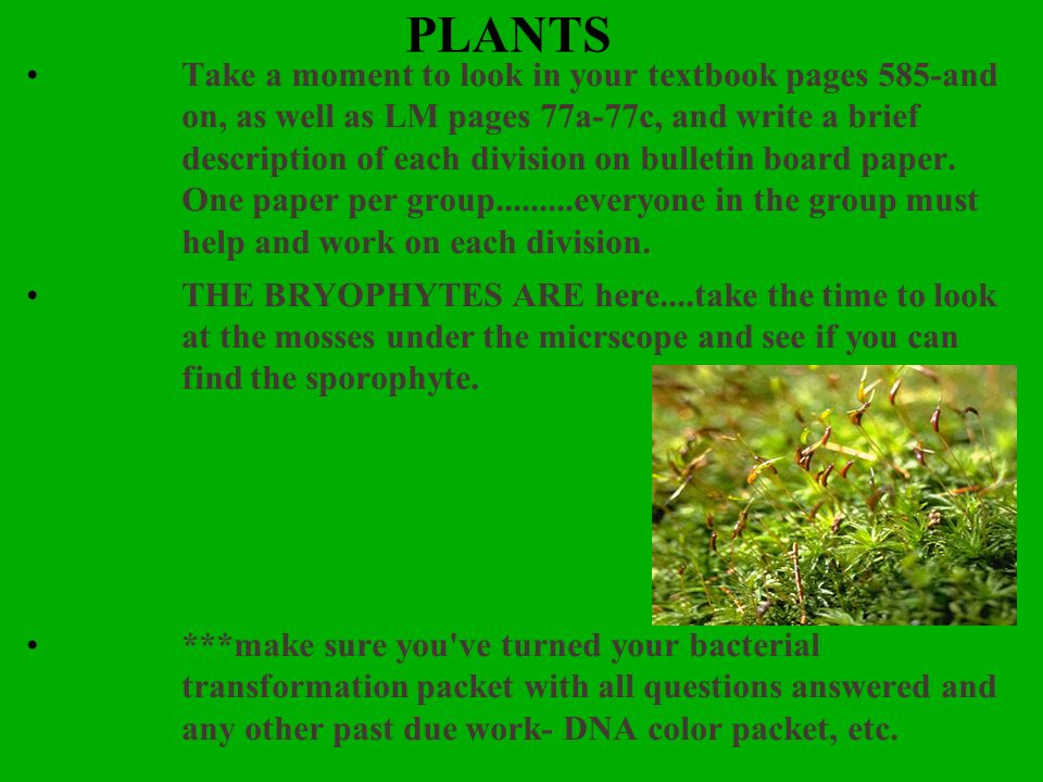 PLANTS Take a moment to look in your textbook pages 585-and on, as well as LM pages 77a-77c, and write a brief description of each division on bulleti