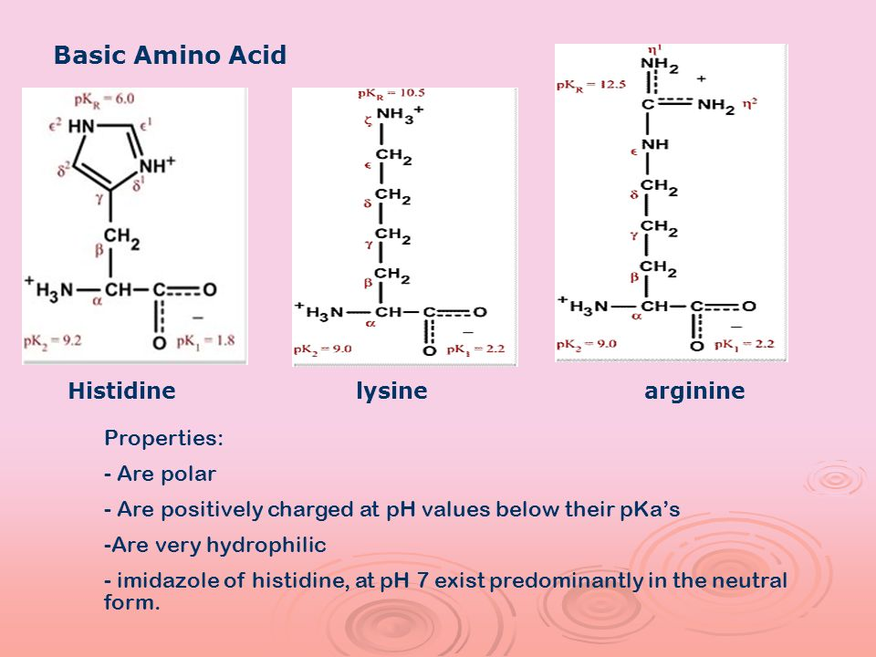 Basic Amino Acid Properties: - Are polar - Are positively charged at pH values below their pKas -Are very hydrophilic - imidazole of histidine, at pH