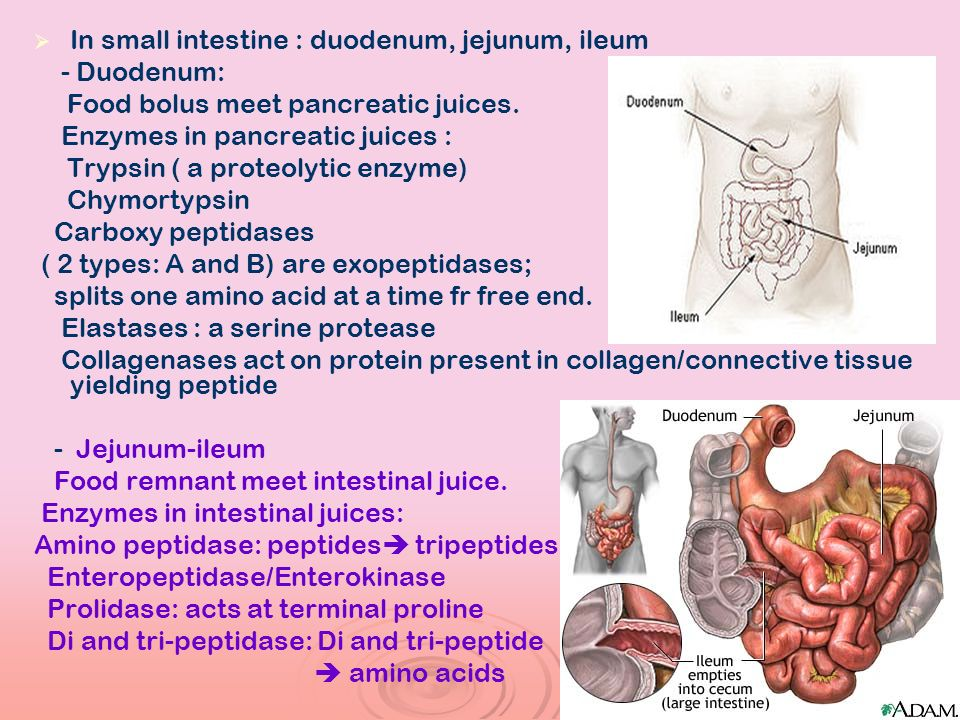 In small intestine : duodenum, jejunum, ileum - Duodenum: Food bolus meet pancreatic juices. Enzymes in pancreatic juices : Trypsin ( a proteolytic en