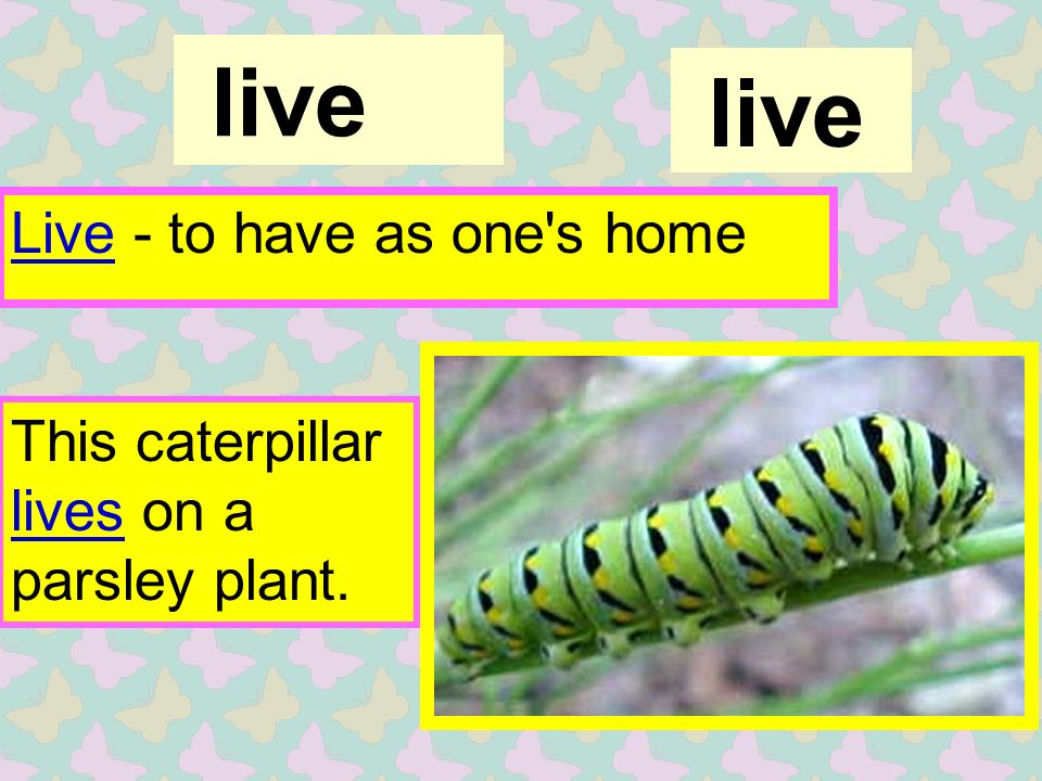 live Live - to have as one s home live This caterpillar lives on a parsley plant.