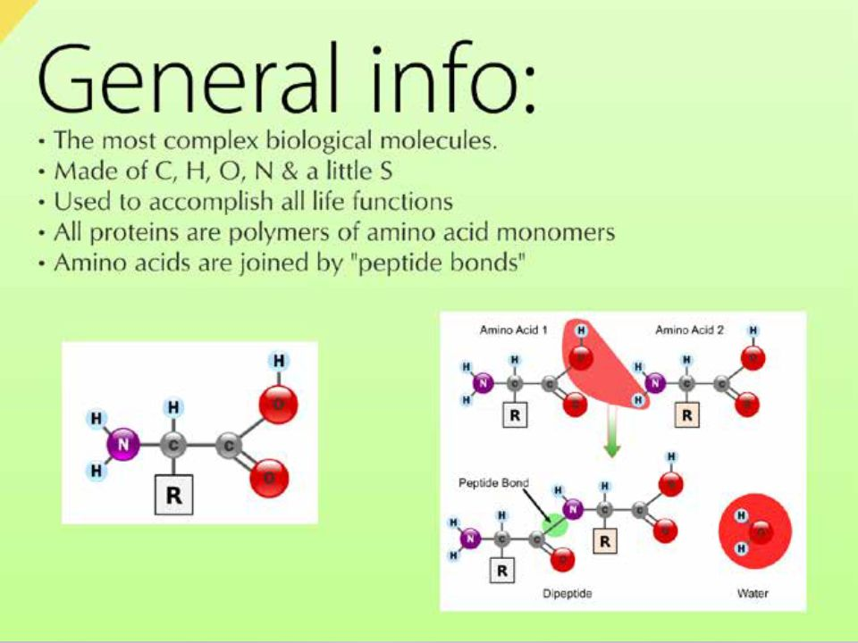 Proteins Functions- structural, regulating cell functions (enzymes), antibodies, hormones Functions- structural, regulating cell functions (enzymes), antibodies, hormones Made of chains of amino acids Made of chains of amino acids There are 20 amino acids that are used by all living organisms to make proteins There are 20 amino acids that are used by all living organisms to make proteins Proteins can be any length and any combination of amino acids therefore there are millions of proteins used by living organisms.