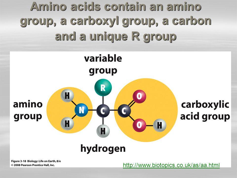 http://www.johnkyrk.com/amino acid.html