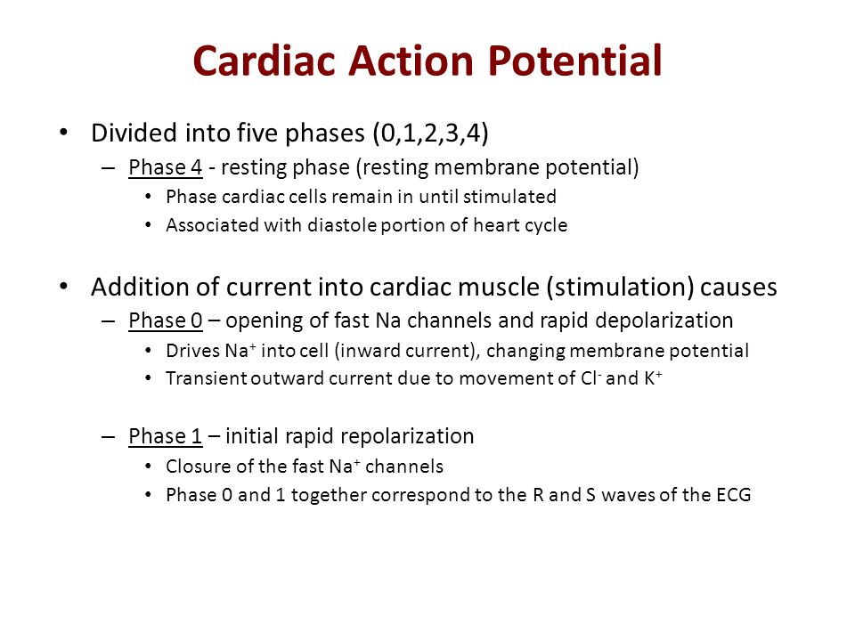 Cardiac Action Potential Divided into five phases (0,1,2,3,4) – Phase 4 - resting phase (resting membrane potential) Phase cardiac cells remain in unt