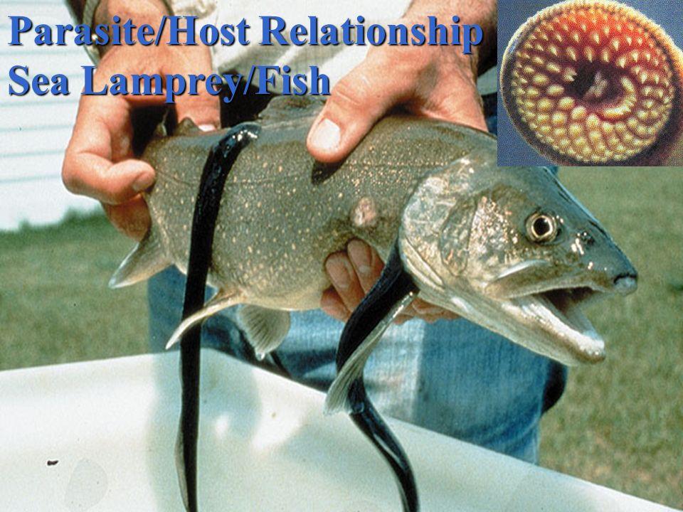 Parasite/Host Relationship Guinea worm/Human