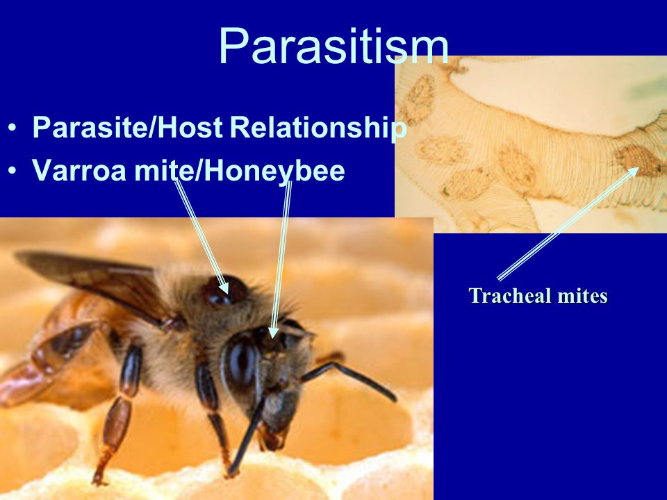 Parasite/Host Relationship Sea Lamprey/Fish