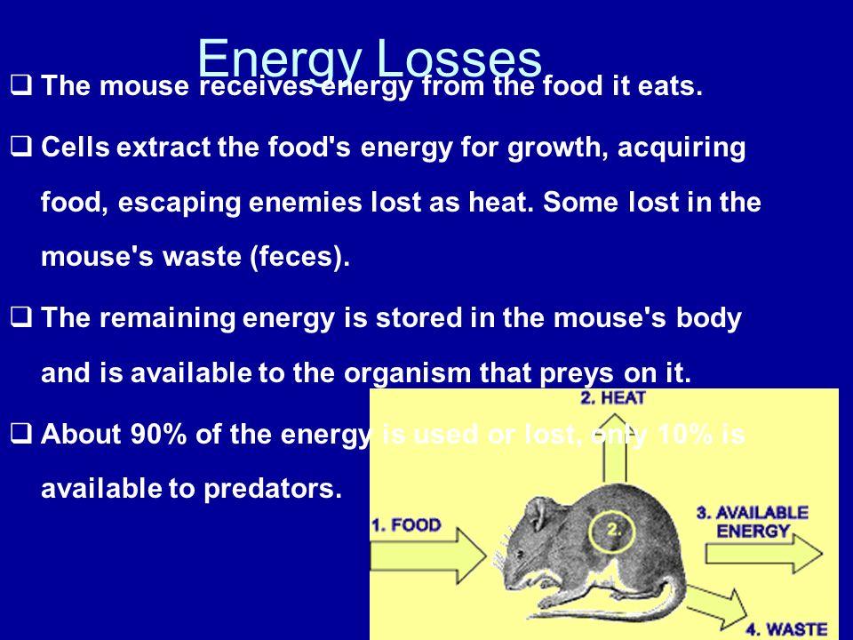 Energy Flow through a food Chain