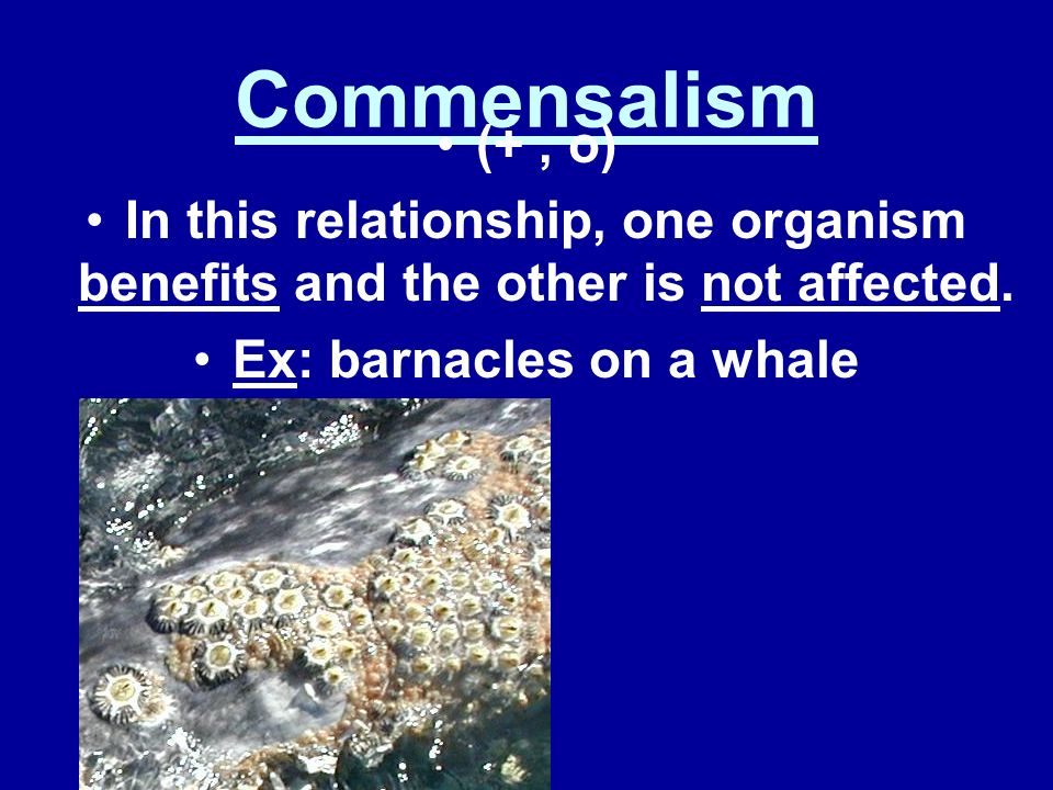 2. Symbiotic Relationships Different organisms may live together in a close association. This is known as symbiosis. There are three types: 1. Commens