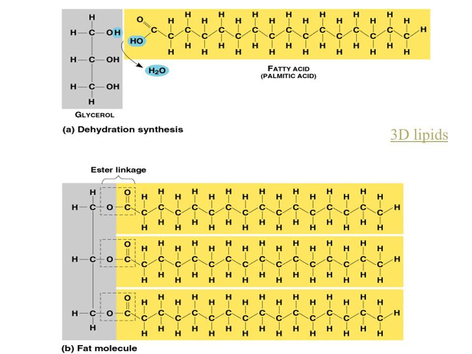 3D lipids