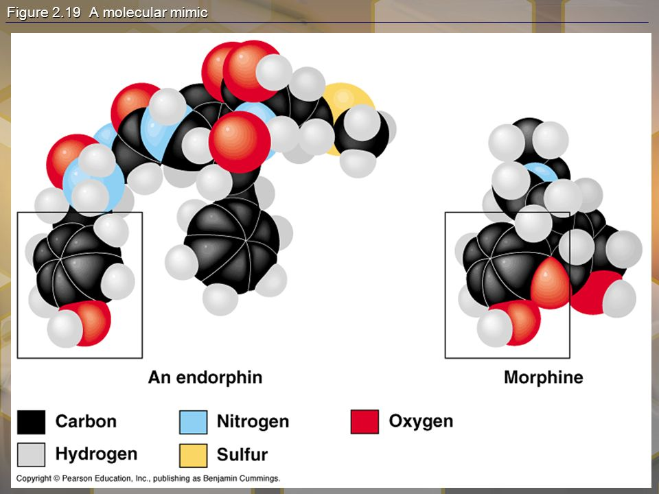 Chromatography This technique has the ability to purify substances –It rips each component from mixture and separates it single components Theory of chromatography –Chemical substances partially escape into surroundings when: Dissolved in a liquid Absorbed into a solid