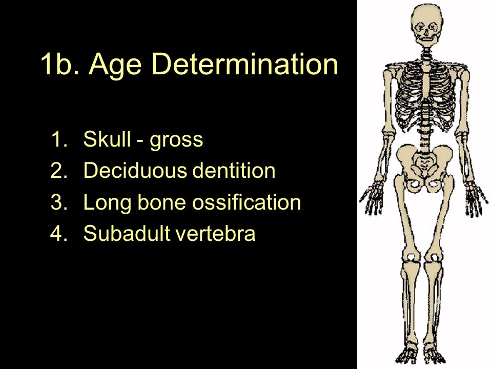 Objective: You will be able to explain how bones can help determine age and sex. Do Now: Read p. 18-19 (Forensic anthropology) Give all the informatio