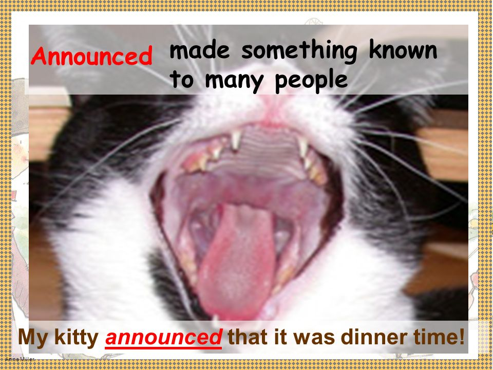 Announced My kitty announced that it was dinner time! made something known to many people