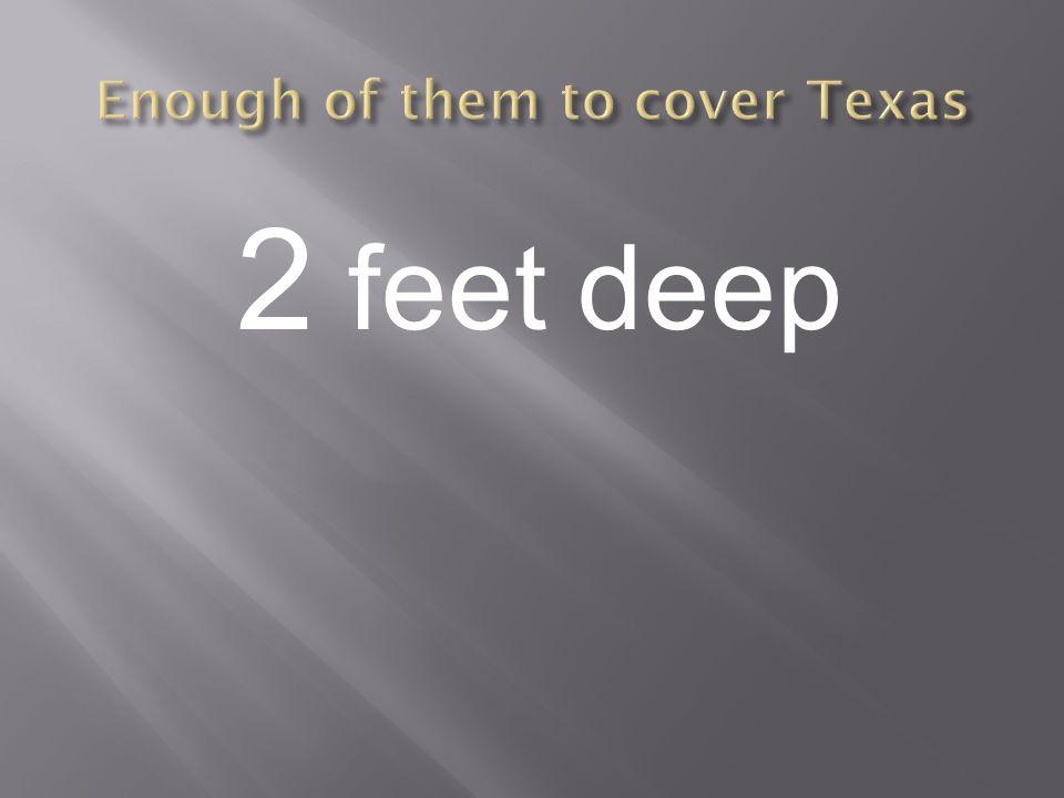 2 feet deep