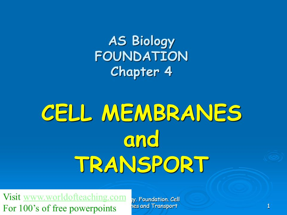 AS Biology. Foundation. Cell membranes and Transport2 The Cell