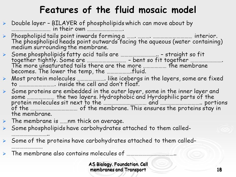 AS Biology. Foundation. Cell membranes and Transport18 Features of the fluid mosaic model Double layer – BILAYER of phospholipids which can move about
