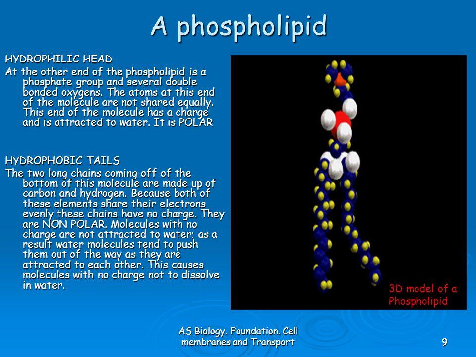 AS Biology.Foundation.