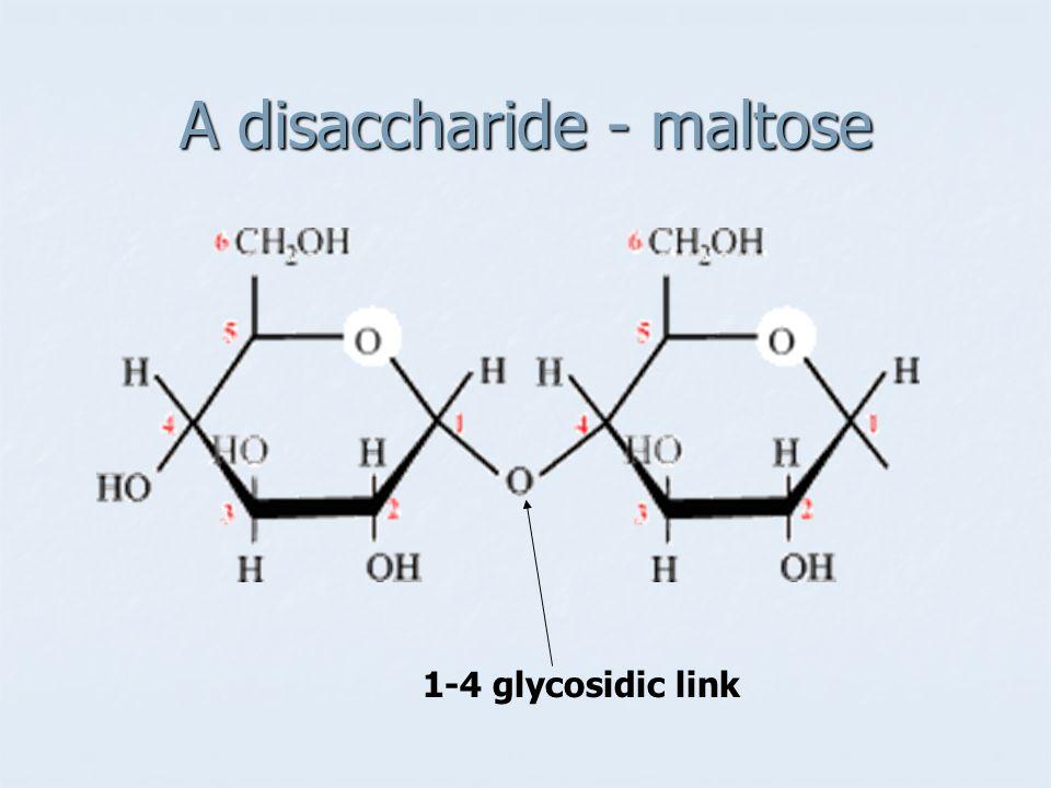 A disaccharide - maltose 1-4 glycosidic link