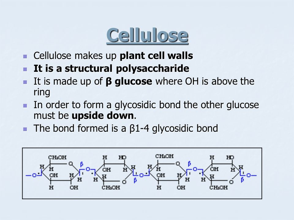 Cellulose Cellulose makes up plant cell walls Cellulose makes up plant cell walls It is a structural polysaccharide It is a structural polysaccharide