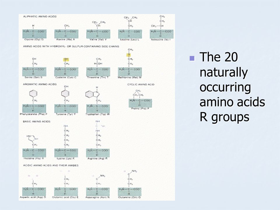 The 20 naturally occurring amino acids R groups The 20 naturally occurring amino acids R groups