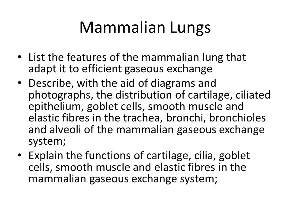 Mammalian Lungs List the features of the mammalian lung that adapt it to efficient gaseous exchange Describe, with the aid of diagrams and photographs