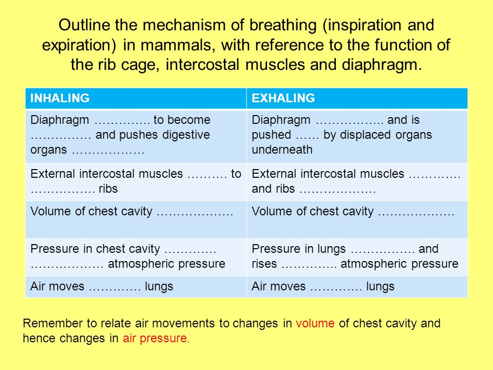Outline the mechanism of breathing (inspiration and expiration) in mammals, with reference to the function of the rib cage, intercostal muscles and di