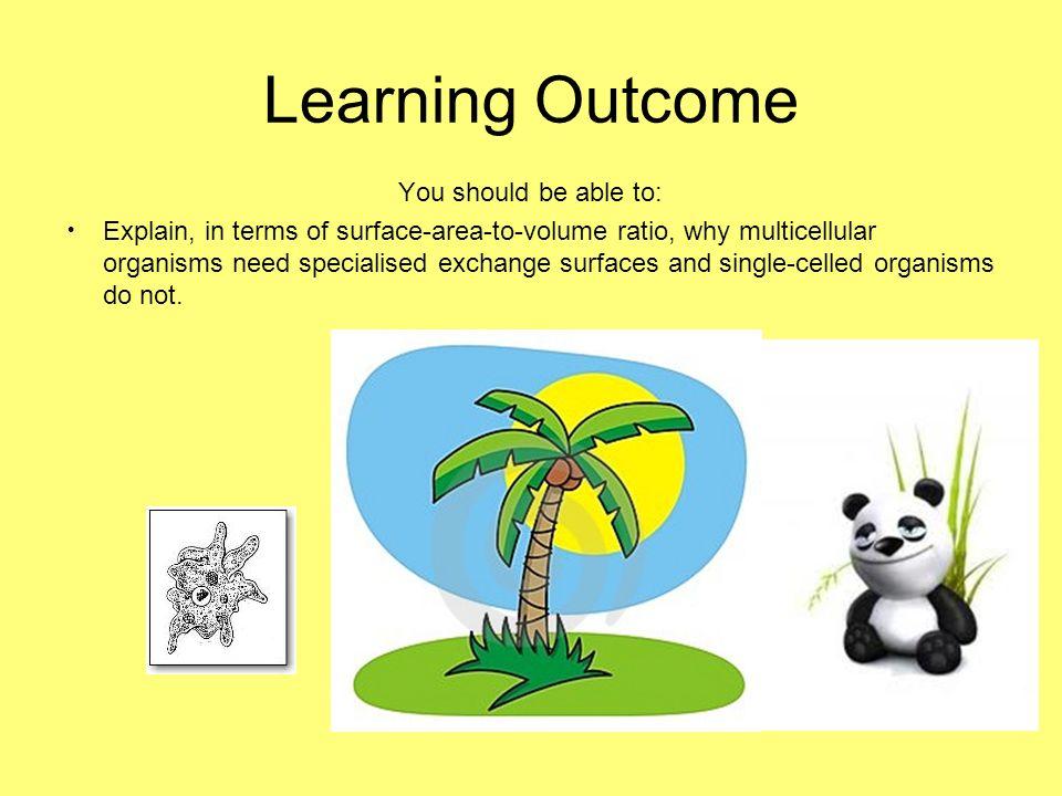 Learning Outcome You should be able to: Explain, in terms of surface-area-to-volume ratio, why multicellular organisms need specialised exchange surfa