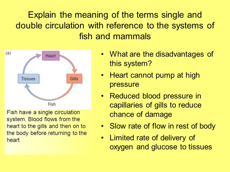 Explain the meaning of the terms single and double circulation with reference to the systems of fish and mammals What are the disadvantages of this sy