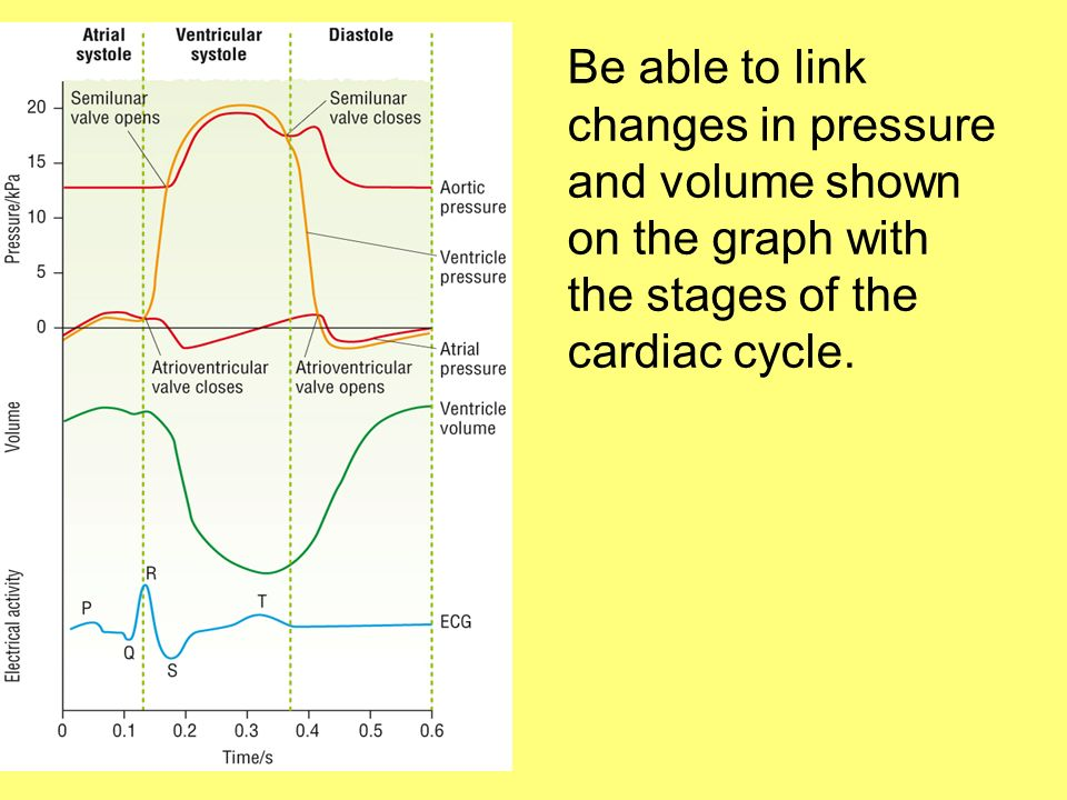 Be able to link changes in pressure and volume shown on the graph with the stages of the cardiac cycle.