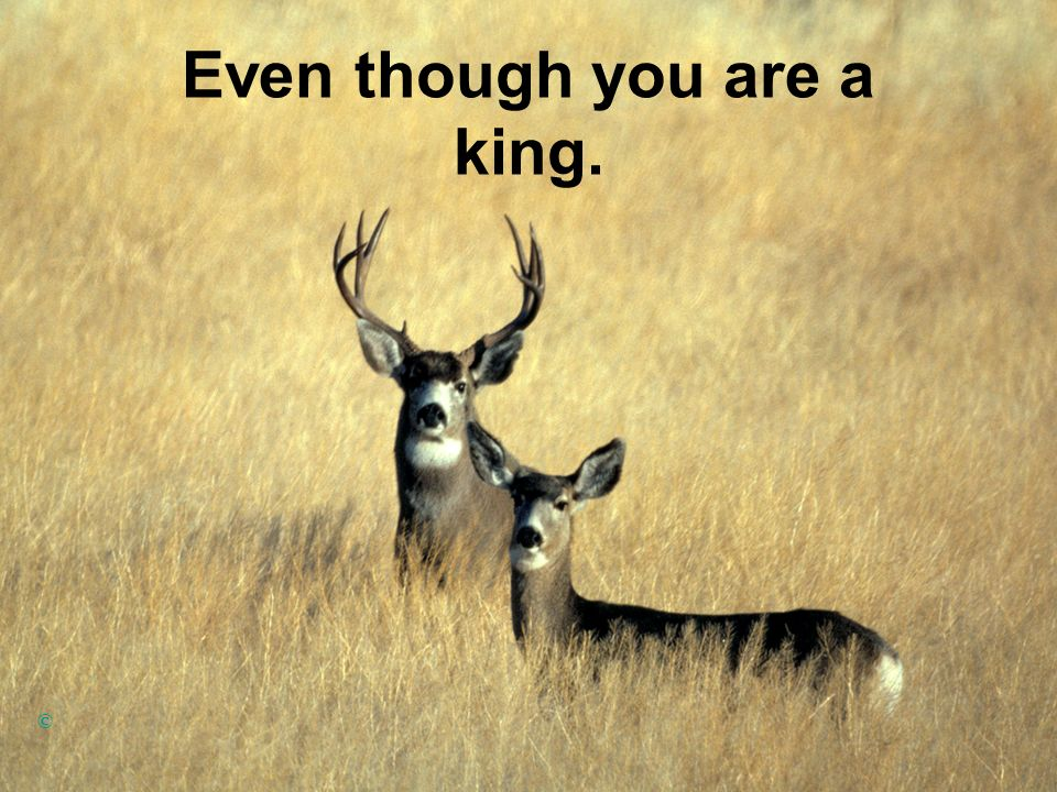 Even though you are a king. ©