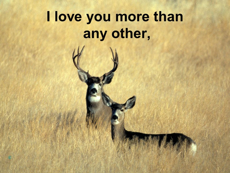 I love you more than any other, ©