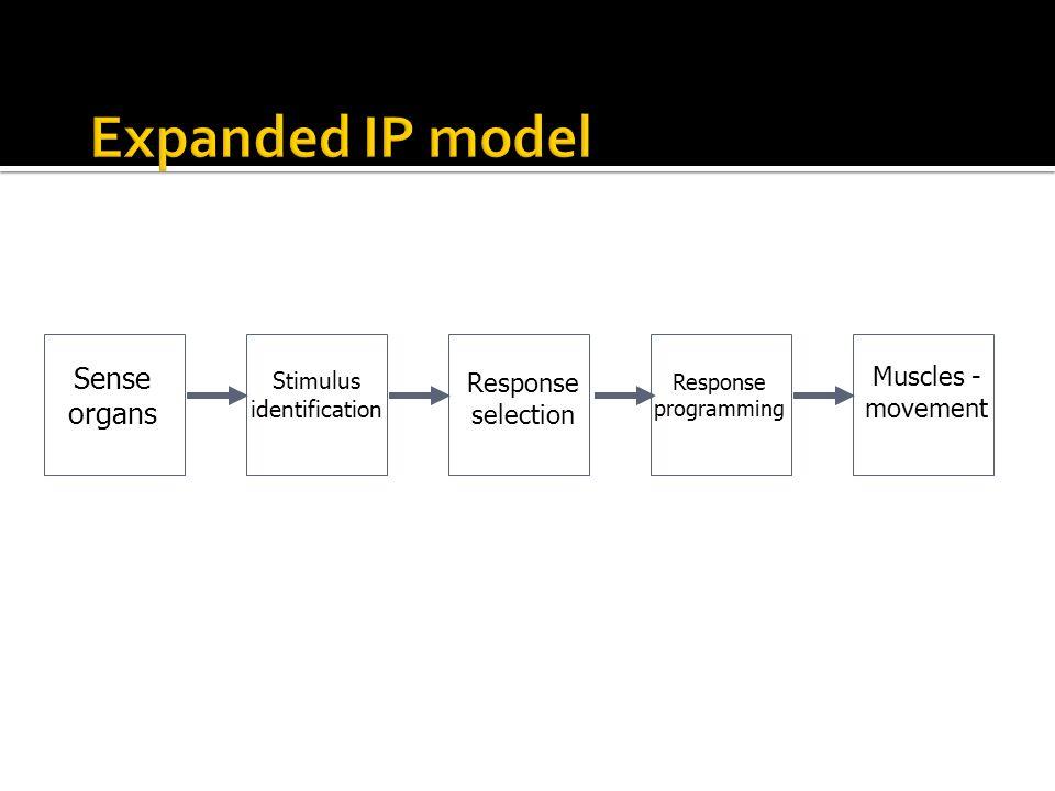 Sense organs Response selection Stimulus identification Response programming Muscles - movement