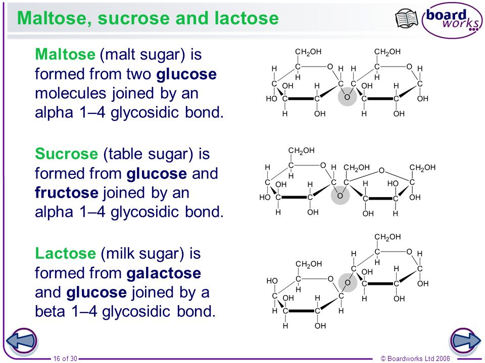 16 of 30© Boardworks Ltd 2008 Maltose, sucrose and lactose Maltose (malt sugar) is formed from two glucose molecules joined by an alpha 1–4 glycosidic